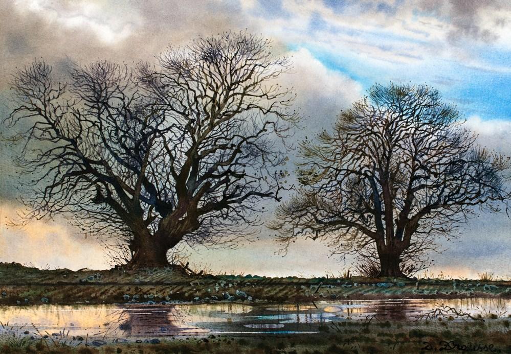 arbres et flaques